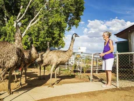 Betty Forster greets Emus outside her home in Longreach as they come in looking for a feed and a drink. Picture: Lachie Millard