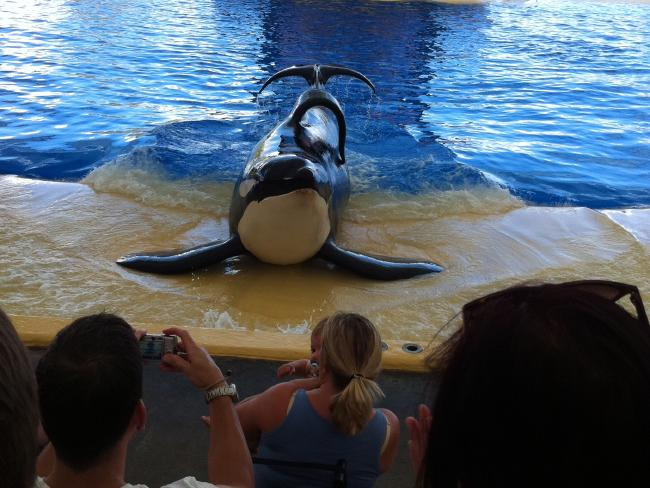 The psychologically damaging effects of captivity on killer whales is well understood.