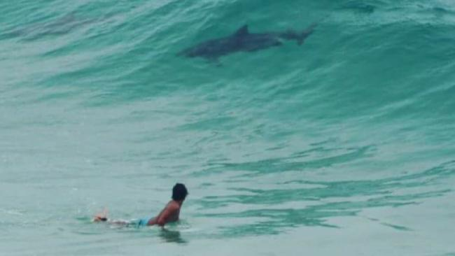What do you reckon? Shark or dolphin? Picture: Kellie Wilson
