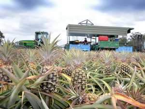 CQ farmer fined $20k after post cyclone workplace accident
