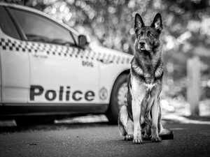Police dog Kal hangs up his leash