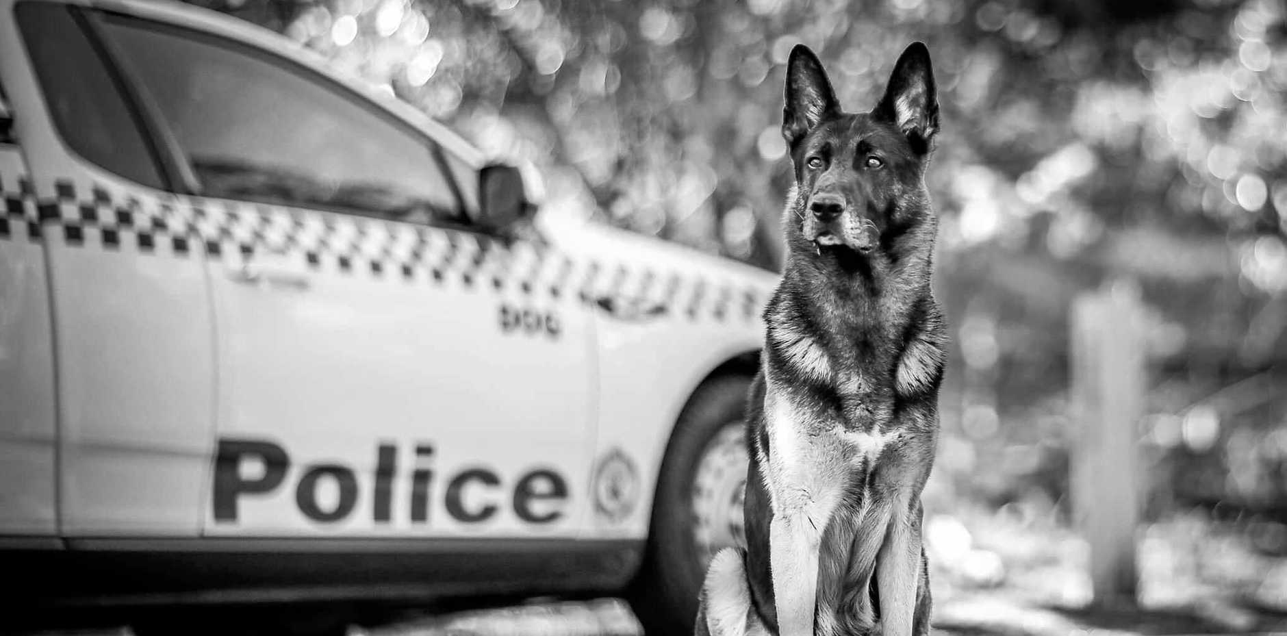 Police dog Kal, who worked in the Coffs/Clarence area, has officially retired.
