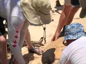 Massive turtle rescue effort filmed