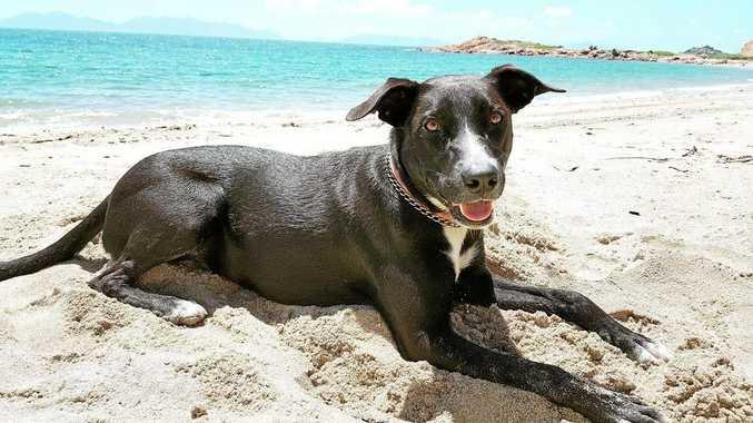 Sunshine Coast Council has made a decision on a proposed dog on-leash area at Warana and Bokarina beaches.