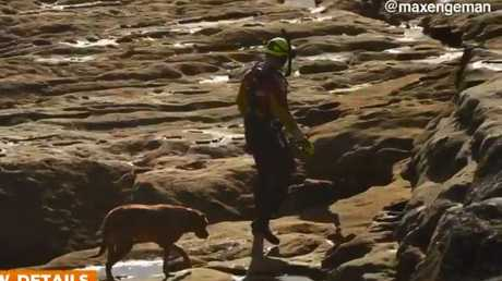 A rescue crewman leads the dog to safety. Source: maxengeman/Channel Nine