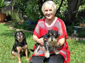 Dog fostering keeps treasured pets alive