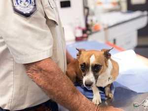 DUMP DOG: CCTV now part of animal cruelty investigation