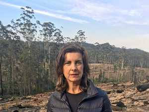 NSW Greens dub forest agreements a 'failure'