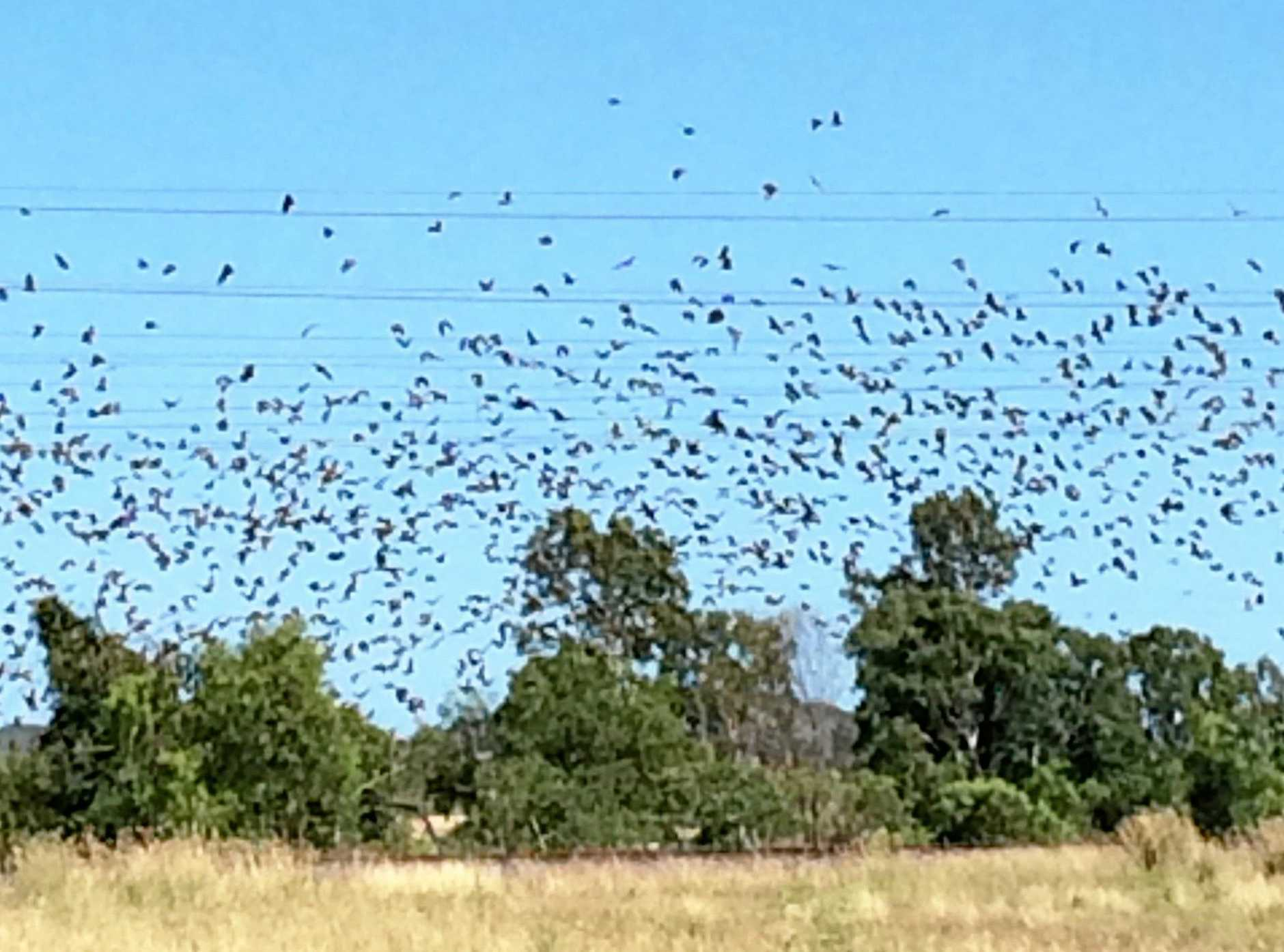 State department reveals plan to combat CQ town's bat colony