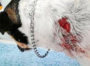 Pet dog attacks on the rise