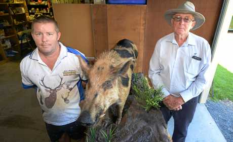 L-R Taxidermist Gary Jorgensen with Banana Shire councillor Pat Brennan and a stuffed boar the council hopes to use to raise awareness of feral pest management.