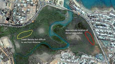Map showing the relocation of flying foxes in Yeppoon.