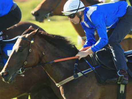 Hugh Bowman rides Winx in her last barrier trial at Rosehill Gardens. Picture: Getty Images