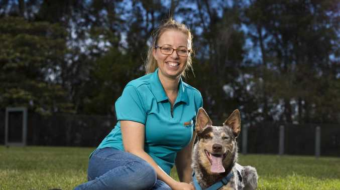 More owners need to better train their dogs, such as using services provided by dog etiquette trainer Janine Soryal, pictured with her dog Gus. Picture: NIGEL HALLETT