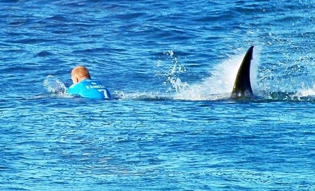 Mick Fanning's famous encounter with a white shark off Jeffrey's Bay South Africa in July 2015.
