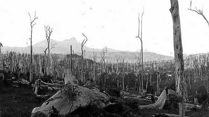 TIMBER TALK: Timber clearing in the Uki district in 1890.