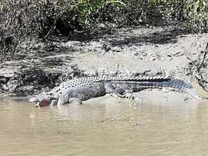 Pilots spot crocs in Pioneer River and off Eimeo