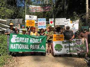 Yet another protest held to prevent logging of NSW forests