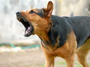 Dog attack capital of the Northern Rivers identified
