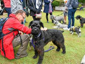 Sociable schnauzers set to get together over lunch