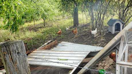 Sharon Trim's chook shed were damaged in the wild storm on  February 12.
