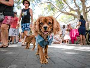 Calling Noosa's cutest canines for Pawsome Parade