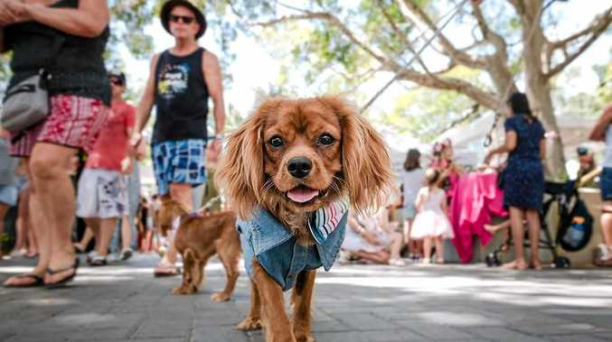 PUPPY POWER: Pawsome Paws parade is searching for Noosa's cutest dogs.