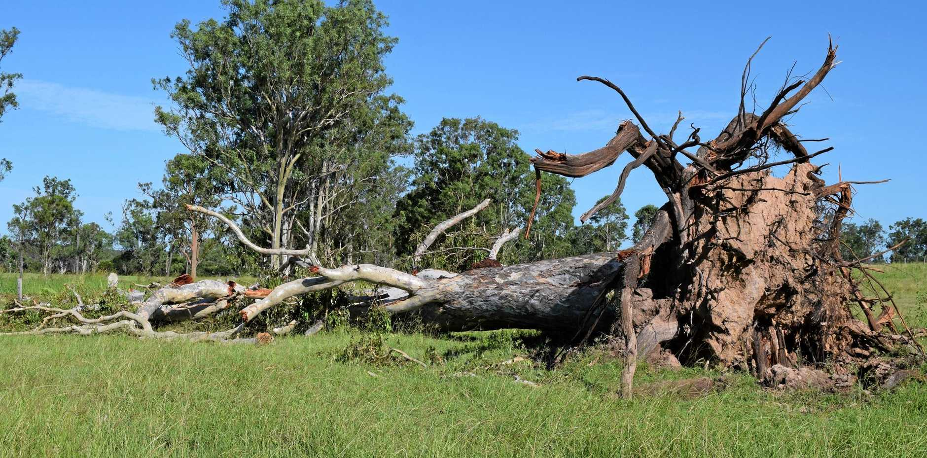 Trees were destroyed when the Boompa area was hit by an intense system late Monday afternoon.