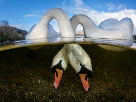 Grant Thomas was awarded British Underwater Photographer of the Year 2018 for Love Birds. Picture: Grant Thomas/UPY 2018
