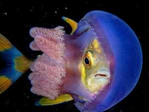 Underwater photos you won't believe