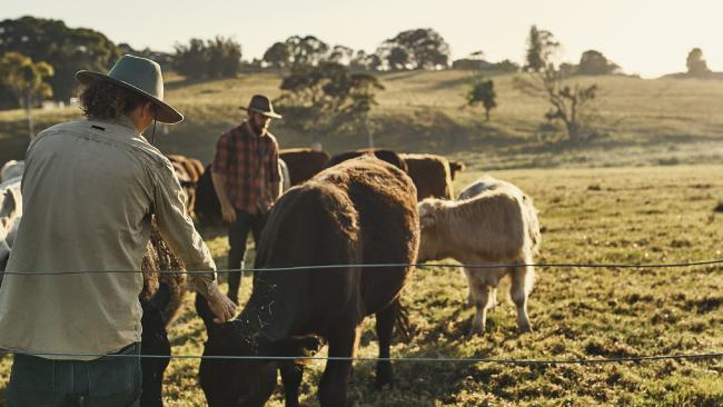 Jobs in agriculture, forestry and fishing pay just $1032 more per year than the average Australian income. Picture: iStock