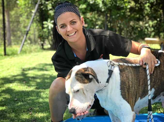 BEAT THE HEAT: Jay-nee Ralph from the Gympie RSPCA Cools off with Xena yesterday.