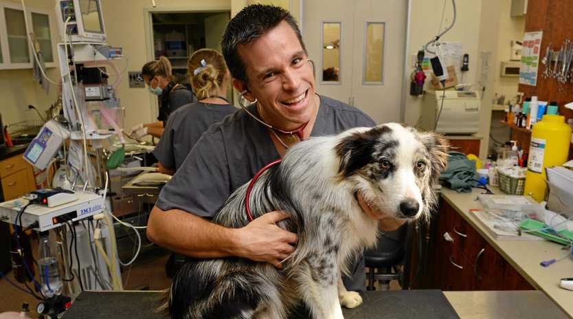 EXPERT: Vet Dr Andrew Hemming, owner of Flinders View Veterinary Surgery and Ripley Veterinary Hospital, with his border collie, Normus.