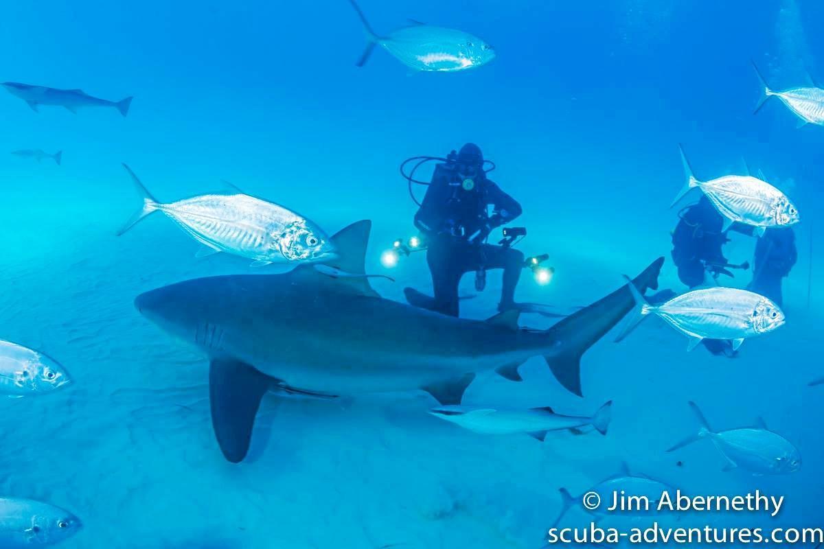 UP CLOSE: Tony Isaacson gets up close with a bull shark.