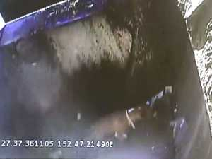 CCTV: 'Someone did it': RSPCA wants answers on dumped dog