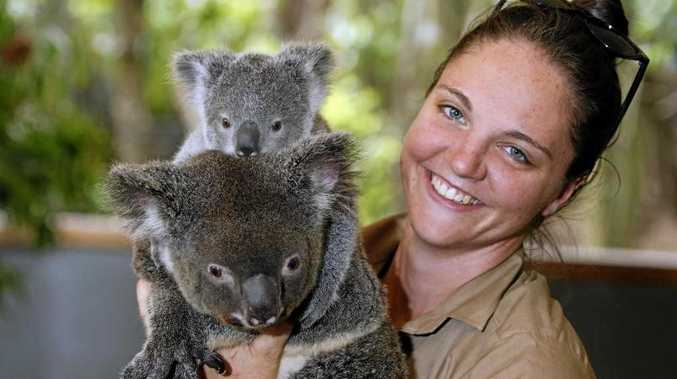OPINION: The Great Koala National Park remains a pressing political issue on the Coffs Coast ahead of next year's State Election.