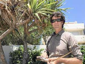 Saving Noosa's scene stealing pandanus palms