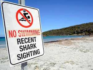 'I stood on it': Coast woman's close encounter with shark