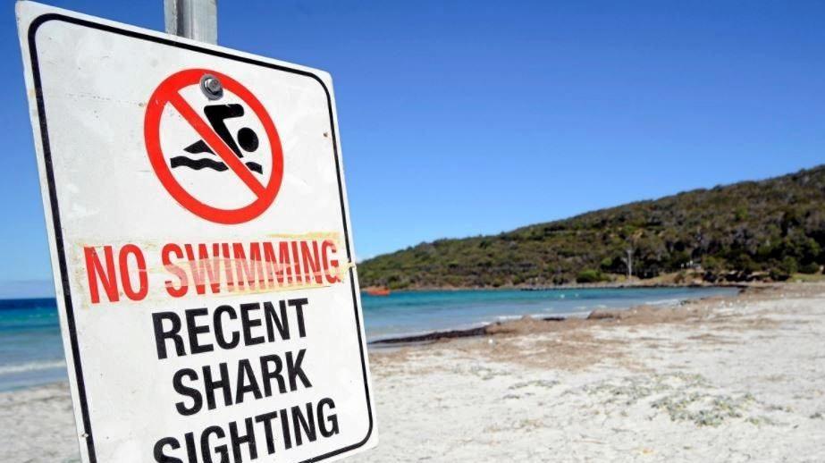 I stood on it': Coast woman's close encounter with shark