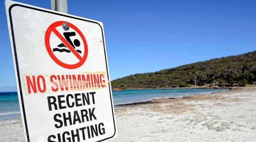 A SUNSHINE Coast woman has survived an almighty scare with a shark, swimming at Mooloolaba Beach.
