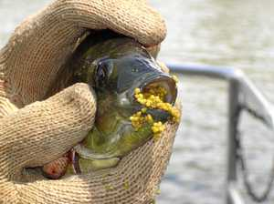 "Lake's water quality a worry after 20 fish found ""belly up"""