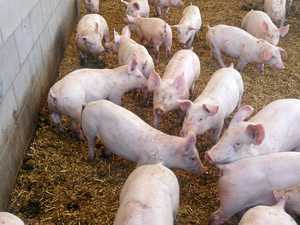 Toowoomba region piggery approved to expand operation