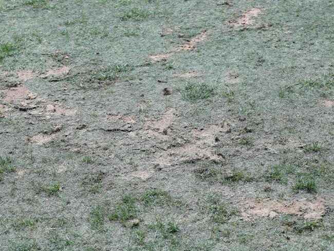 Poor pitch condition at Hindmarsh Stadium after AFLX. Photo: Calum Robertson