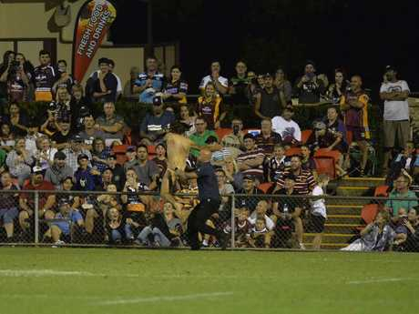 A streaker on the field at the Brisbane Broncos v Gold Coast Titans NRL pre-season trial at Clive Berghofer Stadium.