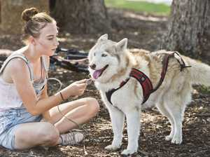 Sled dogs take over Toowoomba