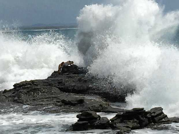Two girls cling to rocks as a large wave hits Mooloolaba Beach. They reportedly walked away possibly scratched, but otherwise uninjured.