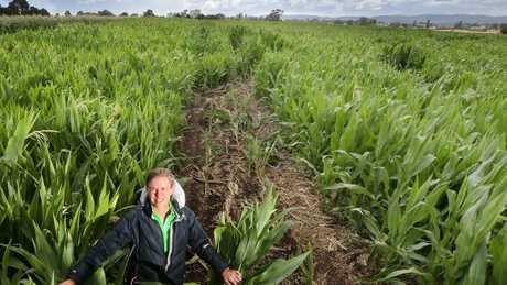 Farmer Anna Clark in the Richie Porte Maze. Picture: Chris Kidd