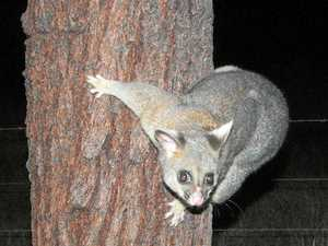 Wildlife warriors eager for night time spotlight tours
