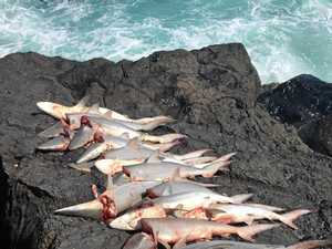 Haul of dead sharks met with outrage