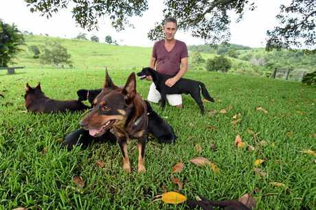 Nsw Dog Breeding Laws